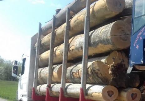 Buşteni de fag în valoare de peste 5.200 lei, confiscaţi dintr-un camion în Vârciorog. Şoferul făcuse mai multe transporturi cu aceleaşi acte