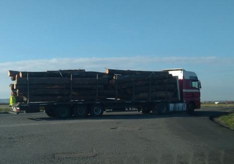 Un şofer de TIR prins cu lemne furate a rămas fără marfă, fără remorcă şi s-a ales cu o amendă de 25.000 lei