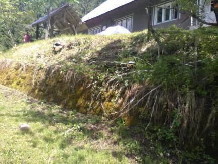 Hărnicie păguboasă: Un angajat al ABA Crişuri a defrişat arbuştii de liliac carpatin, o specie protejată din Valea Iadului! (FOTO)