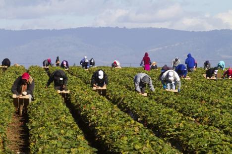 Se caută muncitori pentru Danemarca, Portugalia şi Germania