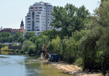 Fără tăieri de arbori! Ecologiştii cer ca amenajarea malului stâng al Crişului să respecte Acordul de mediu