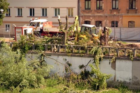 Defrişările continuă! Tăierile de arbori făcute pentru construirea terasei Lotus au avizul APM Bihor (FOTO)
