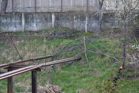 Lumi paralele pe Peţa: Un mal al pârâului din Oradea este năpădit de bălării și mizerii, celălalt este curat (FOTO)