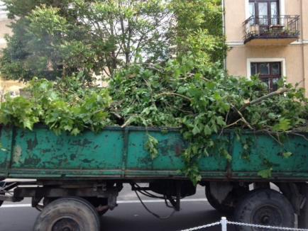 Ecologiştii acuză un măcel verde, pentru că Primăria taie copaci ca să lărgească şoseaua (FOTO / VIDEO)