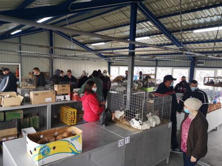 Magazin pentru animale de companie în Piaţa 100 (FOTO)