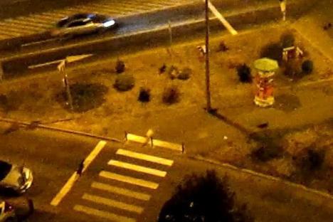 Isteria maidanezilor: Haitele de câini comunitari strică nopţile localnicilor din Rogerius (VIDEO)
