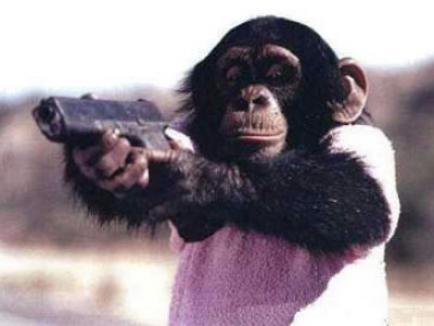 Ziar chinez: Maimuţele, soldaţii armatei talibane