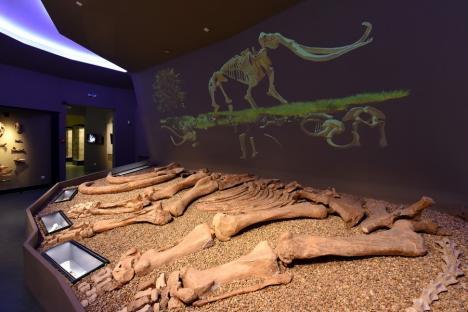 Bihorenii pot vizita cele mai noi expoziții din Muzeul Țării Crișurilor. Printre atracții: schelet de mamut, dinozauri și vase de argint din Evul Mediu