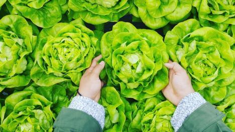 Te preocupă ce mănânci? Un ONG îi invită pe orădeni la discuţii despre hrana sănătoasă