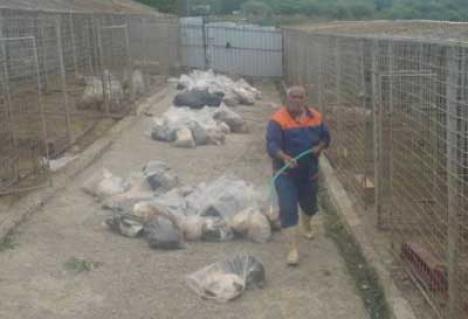 Masacru la adăpostul din Botoşani: sute de câini au fost omorâţi