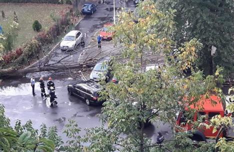 Doi copaci, doborâţi de vânt peste maşini, în Oradea