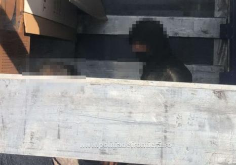 14 străini din Siria, Afganistan și Bangladesh au vrut să treacă granița ilegal prin Bihor (VIDEO)