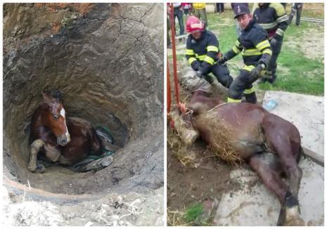 Mânză salvată de pompierii din Bihor, după ce a căzut într-o fântână adâncă de patru metri (FOTO / VIDEO)