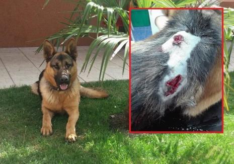 Trei vânători s-au ales cu dosare penale pentru schingiuirea animalelor: au împuşcat câinele unei familii din Hotărel