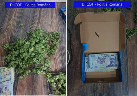 Tânăr din Aleşd sub control judiciar pentru trafic de droguri: cultiva cannabis şi aproviziona dealeri din Oradea, Aleşd şi Vadu Crişului (FOTO)