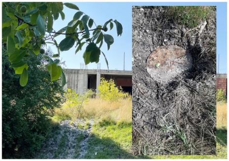 Ruşinos: Deversare de ape fecaloid-menajere, în pârâul Peţa (FOTO)