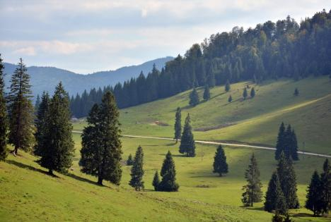 'Vor sfâşia pădurile!': PSD şi ALDE au votat legea care permite mineritul în arii protejate