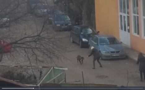 Incident groaznic la Iaşi: Un câine de luptă a smuls testiculul unui trecător! (VIDEO)