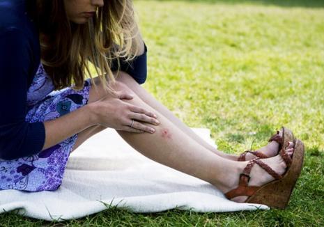 Atenţie, dacă ieşiţi la iarbă verde! Peste 250 de bihoreni au ajuns la spital din cauza căpuşelor, unul dintre ei, suspect de boala Lyme
