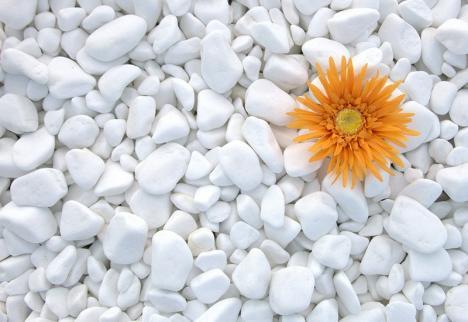 Pentru grădini paradis! La Natural Stone găsiţi tot ce vă trebuie pentru amenajarea şi decorarea curţilor (FOTO)
