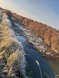 Canalul gunoaielor: În plină arie protejată, la Cefa, un canal colector este plin de PET-uri (FOTO)