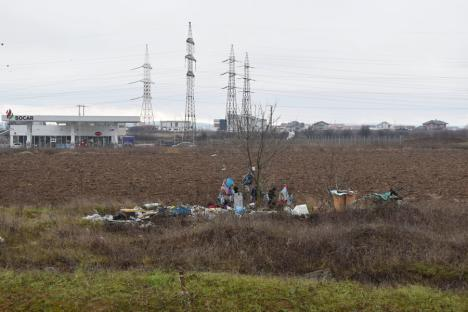 """Ne enervează: Un copac din Oradea a fost """"împodobit"""" cu gunoaie (FOTO)"""
