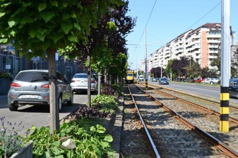 Ne enervează: copacii ciuntiți și crengile lăsate de izbeliște în Cartierul Luceafărul (FOTO)