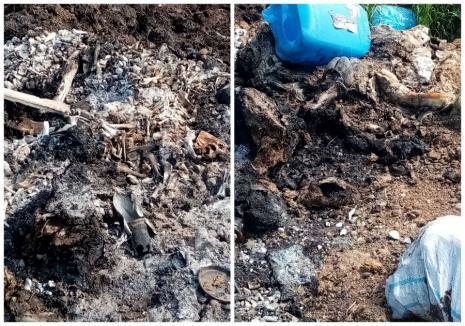 Cunoscutul producător de mezeluri Andromi, amendat de Garda de Mediu Bihor pentru că ar fi ars oase în Nojorid. Patronul va contesta sancţiunea (FOTO / VIDEO)