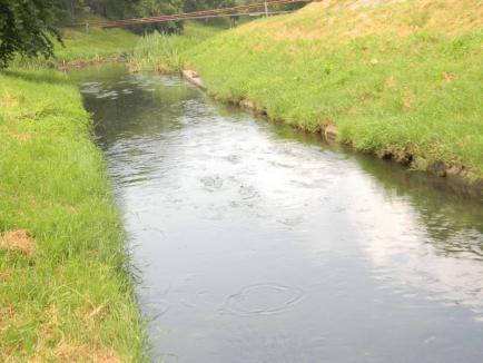Poluatorul plăteşte: După ce a deversat ape uzate în Peţa, OTL a populat pârâul cu 5.000 de puieţi de clean (FOTO / VIDEO)