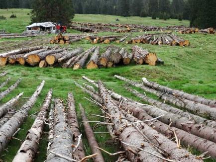 Imagini revoltătoare în Apuseni: Cum distrug tăietorii de lemne o arie protejată (FOTO)