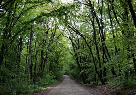 Pădurile Oradiei: 65 de hectare de teren din oraş vor fi împădurite