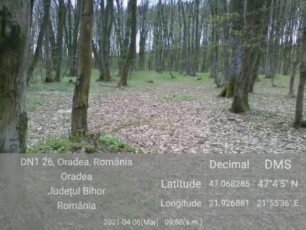 """""""Împuşcături"""" ilegale, într-o pădure protejată de lângă Oradea. Ce decizie au luat comisarii de mediu"""