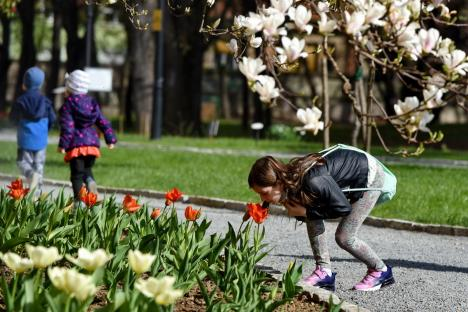 Ziua Pământului, sărbătorită cu tururi ghidate, joi, în grădina Palatului Baroc. Vezi cum arată! (FOTO)