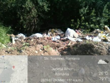 Amendă de 10.000 de lei, pentru un şofer care a aruncat gunoaie la marginea Paleului (FOTO)