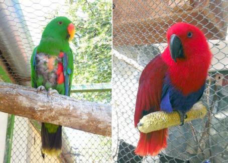 Vorbăreții de la Zoo! Grădina Zoologică din Oradea a primit doi papagali vorbitori (VIDEO)