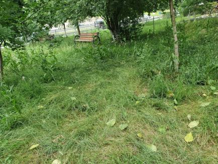 Parcul nepăsării: Un loc de joacă pentru copiii din Oradea, invadat de buruieni (FOTO)