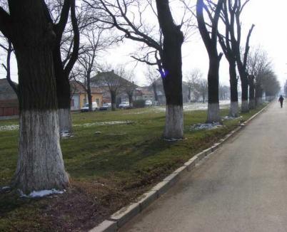 Consiliul Local a aprobat introducerea iluminatului în Parcul Padiş