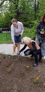 Unii plantează, alţii încasează! Fără să verifice, Primăria Oradea a plătit unei firme plantări făcute de voluntari (FOTO)