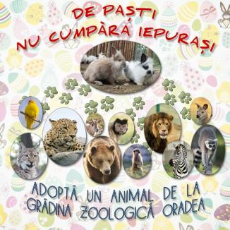 ADP: De Paşti nu cumpăra iepuraşi, adoptă un animal de la Grădina Zoologică!
