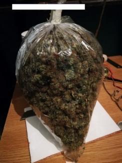 Percheziții DIICOT într-un dosar de trafic de droguri: 2,7 kilograme de cannabis şi peste 100.000 lei ridicaţi din casa unui orădean (FOTO)