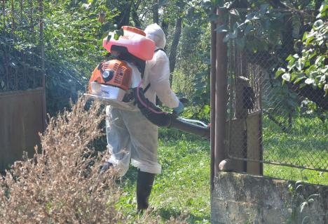 7 localităţi cu focare de pestă porcină în judeţul Bihor. DSVSA: 'Toate animalele afectate sau suspecte trebuie sacrificate'