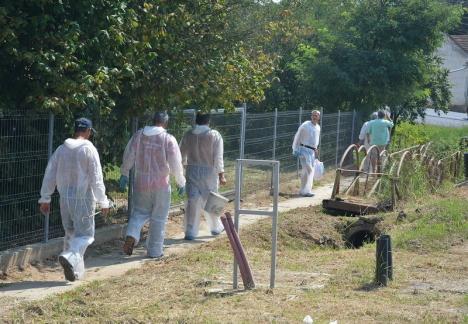 Un nou focar de pestă porcină în Bihor, descoperit în Valea lui Mihai