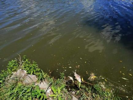 Peşti morţi pe un lac de pescuit de lângă Oradea. Angajaţii pretind că situaţia e normală (FOTO)