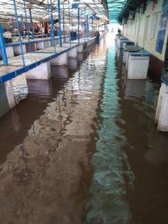 Ploaia şi vântul au făcut ravagii în zona Beiuşului: copaci căzuţi, acoperişuri distruse, piaţa inundată (FOTO/VIDEO)