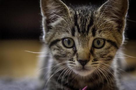 Verdict în cazul unui adolescent din Oradea care şi-a asmuţit câinele pe o pisică şi a filmat în timp ce era ucisă
