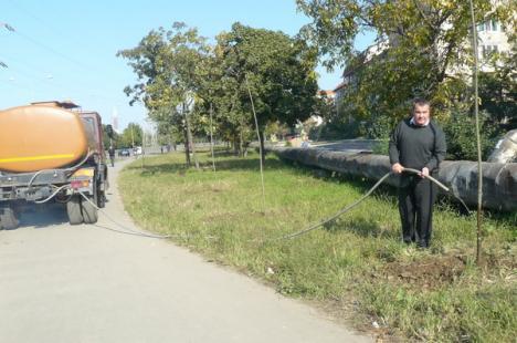 Oradea, tot mai verde (FOTO)