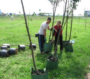 Au plantat 50 de arbori pentru aer mai curat (FOTO)