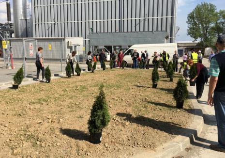 Protejează natura! Activează factura electronică şi noi vom planta un copac pentru tine!
