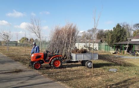 În primăvara şi toamna acestui an, ADP Oradea a plantat peste 2.000 de puieţi (FOTO)