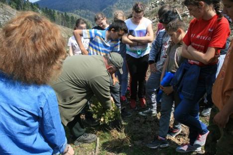 Împreună reîmpădurim Parcul Natural Apuseni! Elevi voluntari au plantat aproape 400 de molizi în Munţii Apuseni (FOTO/VIDEO)